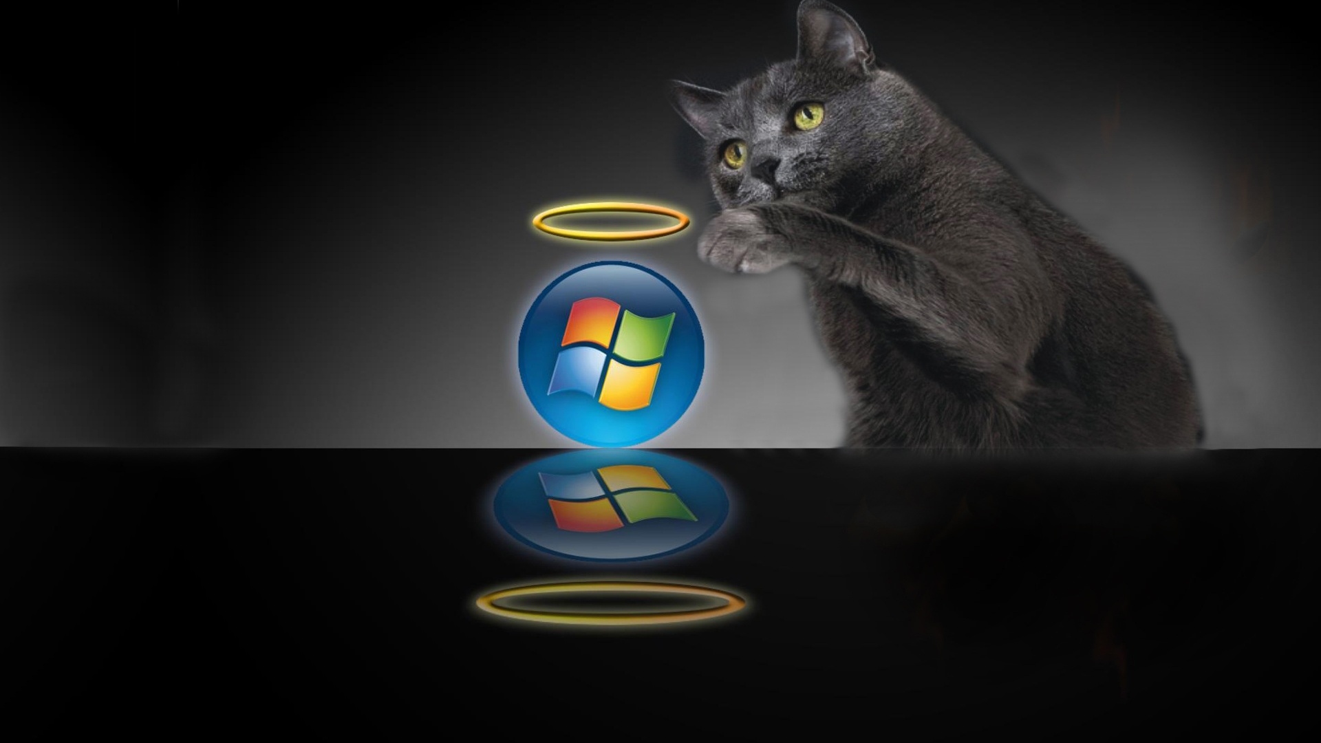 Kat windows